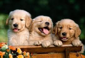 get rid of fleas on puppies