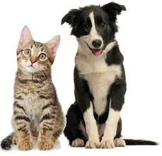 fleasbgone cat and dog pic