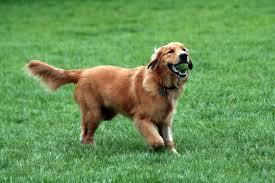 natural dog flea treatment
