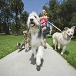 how to start a dog walking