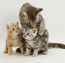 cat-kitten-2